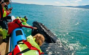 Rauðaskriða - Gentle Giants Whalewatching
